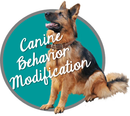 Canine Behavior Modification Button - Carrie pawpins Cat and Dog Trainer, Pet Sitter, Pet Nutrition Counselor, Staff Education Consultations