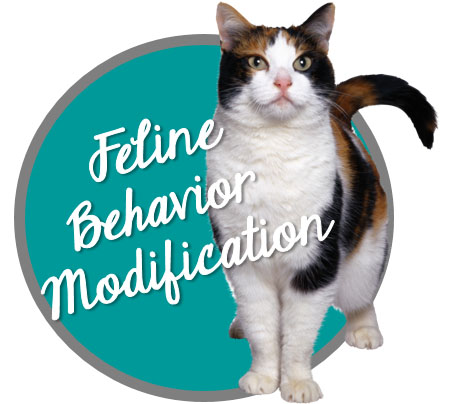 Feline Behavior Modification Button - Carrie pawpins Cat and Dog Trainer, Pet Sitter, Pet Nutrition Counselor, Staff Education Consultations