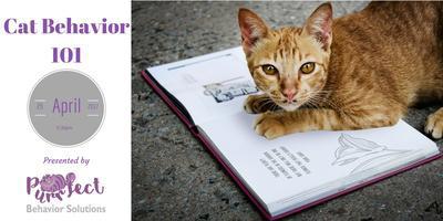 Best Cat Behavior Class 101 [Get Closer to Your Cat]