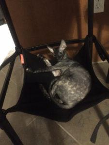 bianca in cat crib
