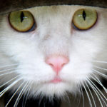 Cat Training in Scottsdale, AZ