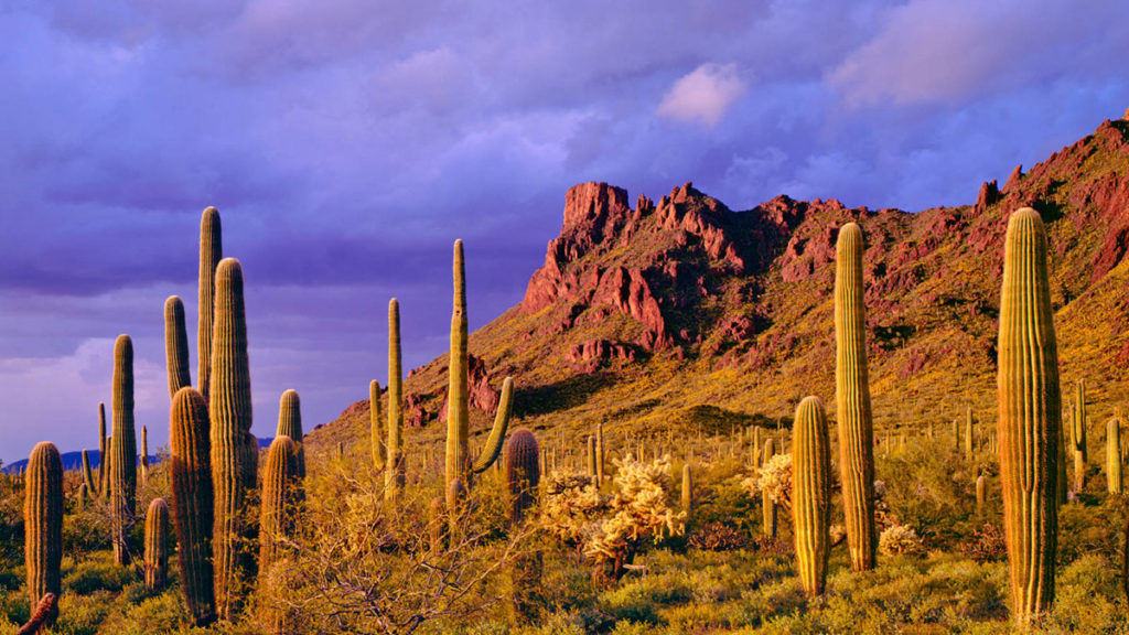 6 Dangers of Living in the Desert & How to Protect Your Pets