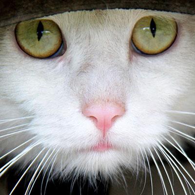 cat training in Scottsdale