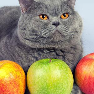 scottsdale cat nutrition