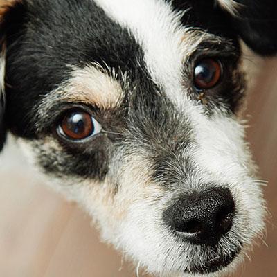 dog training in Scottsdale