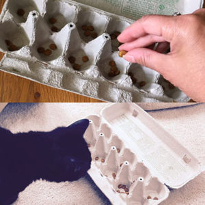 cat food puzzle with egg cartons