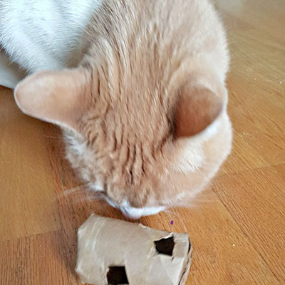 Cat Food Puzzles - Homemade Egg-cersizer