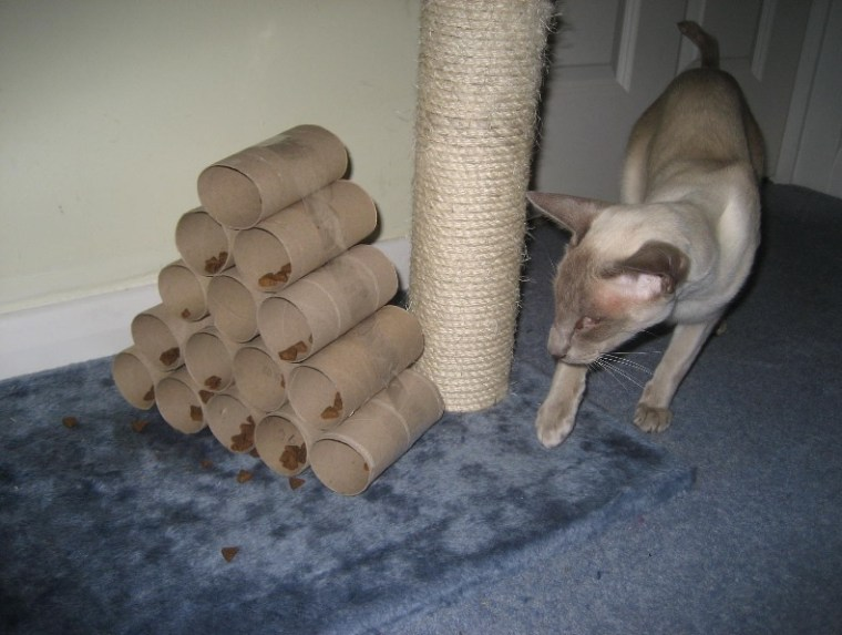 Cat Food Puzzles - Toilet Paper Rolls